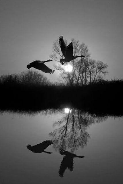 Le reflet de la lune: poésie