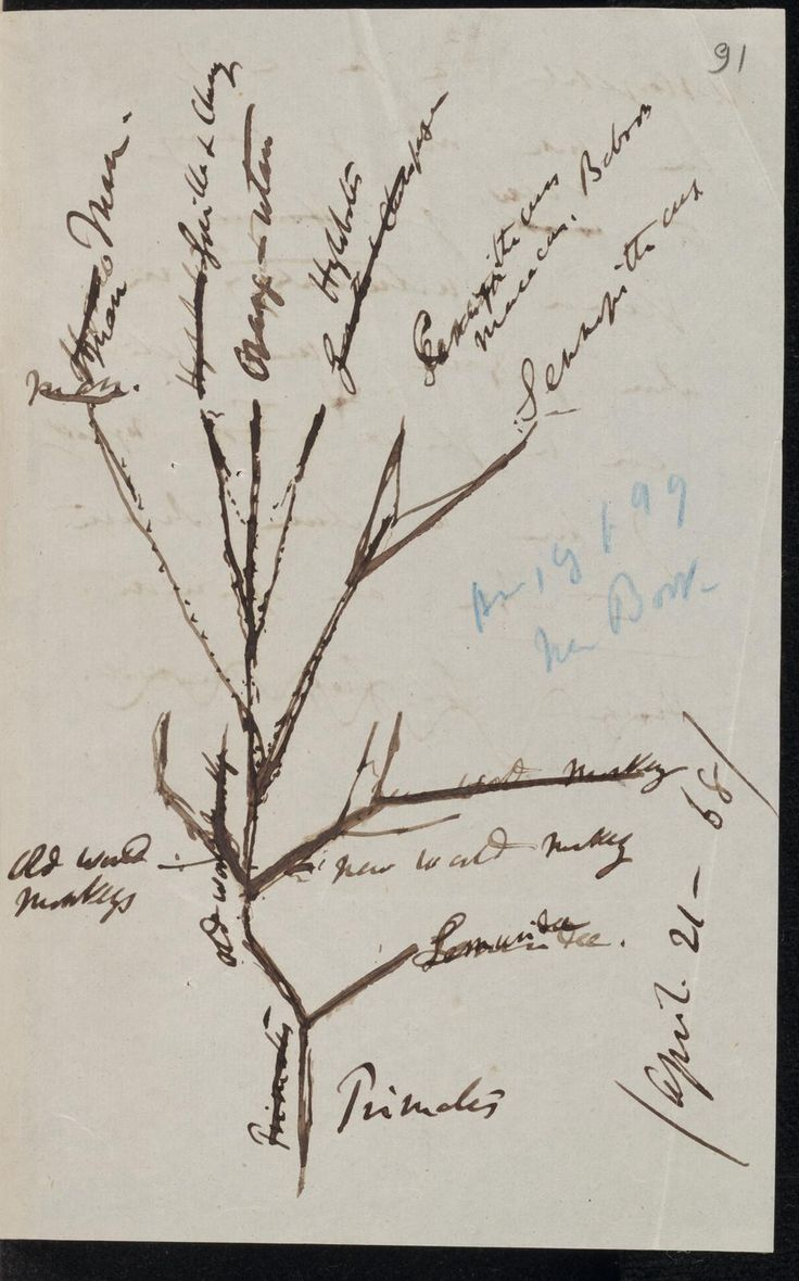 17 best images about charles darwin museums charles darwin tree diagram of primate descent 1868