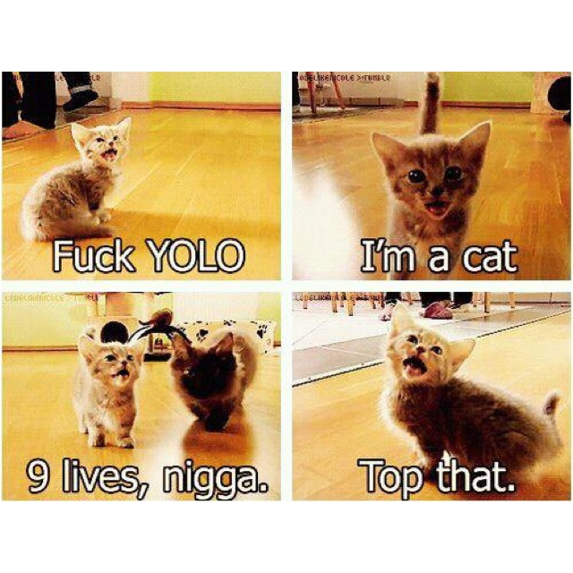 Lol.: Funny Things, Yolo Cat, Funny Pictures, Fucking Yolo, Funny Stuff, Yolocat, Hilarious, So Funny, Fuckyolo