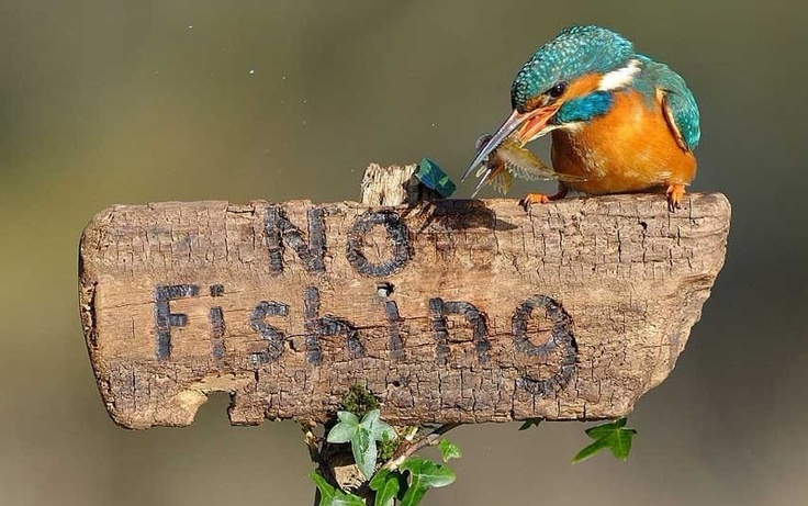 "hi bird! Don't you see ""No Fishing"",? Why you are fishing here?"