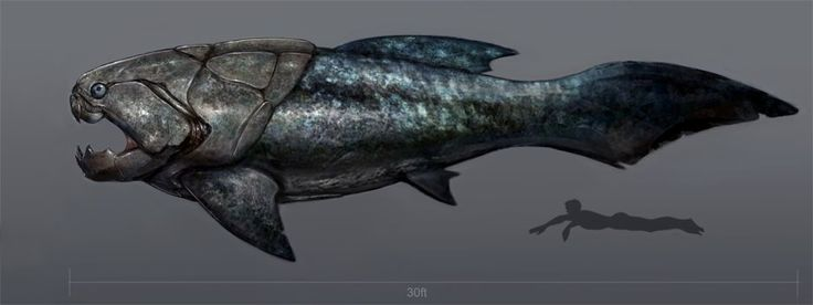 Dunkleosteus, one of the most intimidating fish ever.  From the Devonian Era, known to all fish lovers as the Golden Age.  Note the teeny-tiny human figure swimming underneath.
