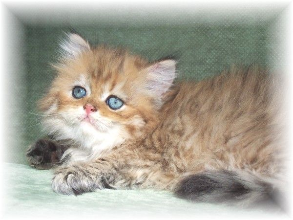 1000 Images About Kittens Up For Adoption In Nyc On – Fondos de Pantalla