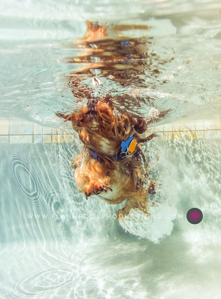 Underwater photographer, Underwater dogs and Pets on Pinterest