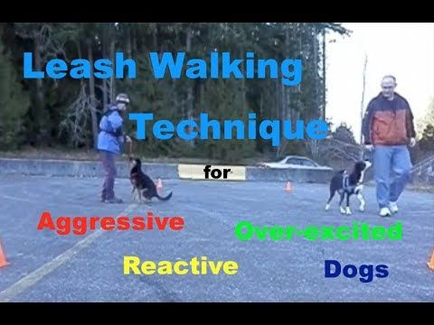 ▶ Leash Walking Technique for Aggressive, Reactive or Over Excited Dogs - YouTube