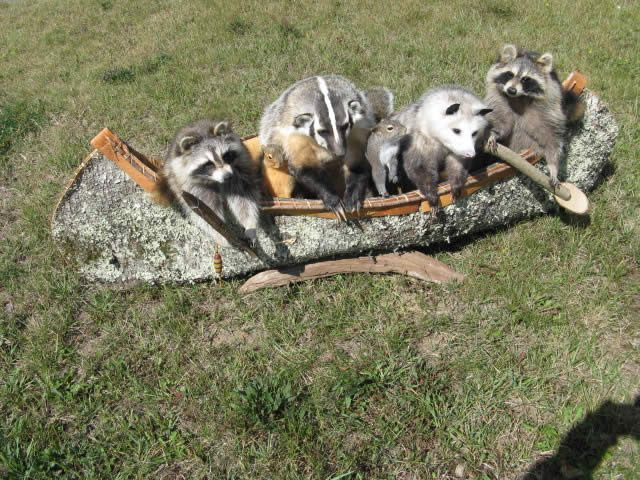 95 Best Taxidermy Mounts Images On Pinterest Taxidermy