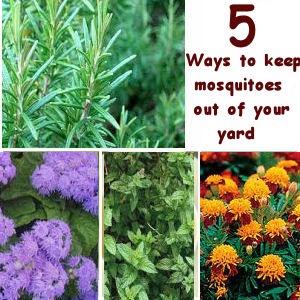 62 Best Images About Gardening On Pinterest Gardens