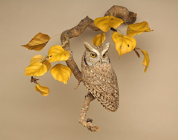 Nature's Creations.   Western Screech Owl - a wood carving by Lona Hymas-Smith.