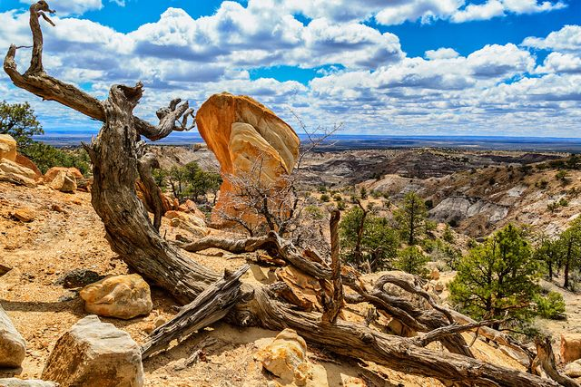 Some of the awesome beauty of Northern New Mexico! Ceja Pelon Badlands by Ken Piorkowski, via Flickr: Petrified Wood, Photo