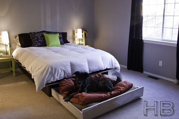 DIY platform bed + doggie bed trundle. smart.