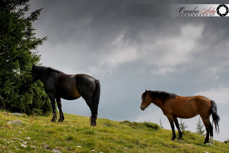 before the rain by Ady Carabas on 500px