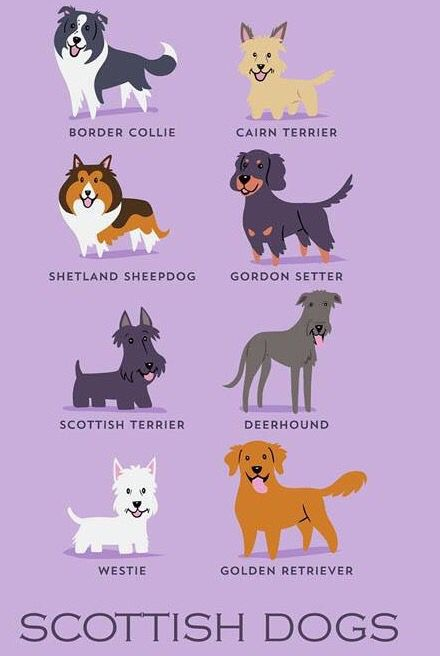 Breed Types