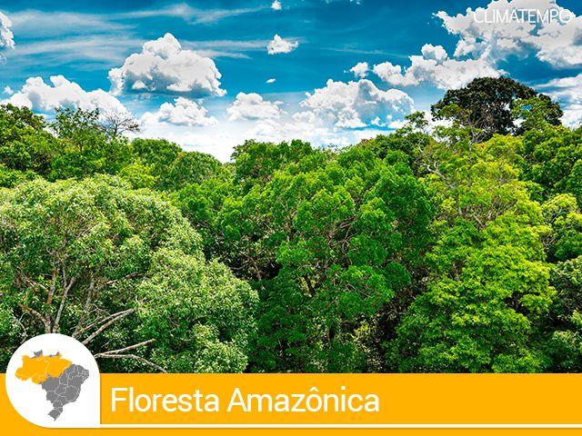 Águas de Pontal: Viaje pelos encantos da Floresta Amazônica