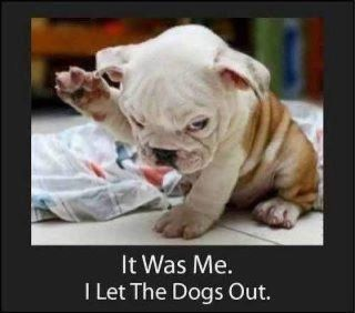 :)Bulldogs Puppies, Funny Dogs, So Cute, English Bulldogs, Pets, Funny Stuff, Things, Dr. Who, Animal
