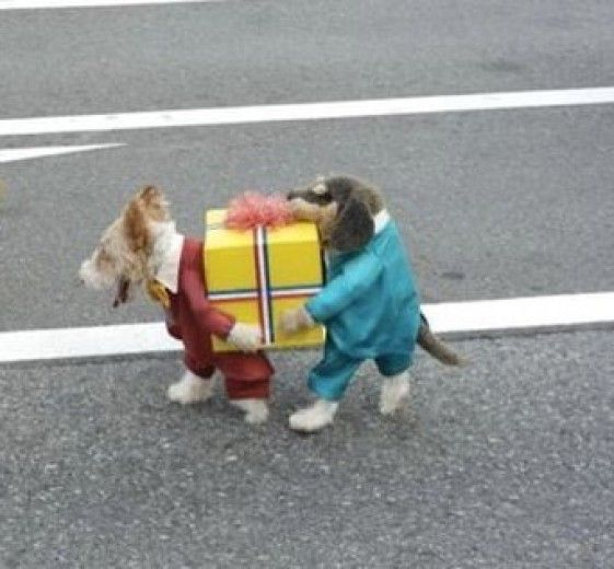 Funny dog' dress. I don't know if cheer or blame the owner... Poor dog!
