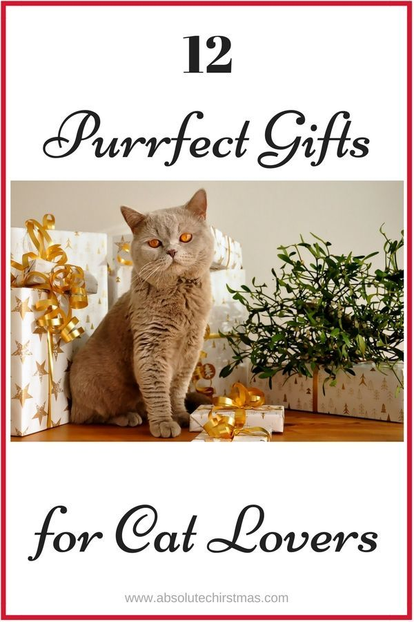 purrfect gift ideas for cat lovers cat gifts for cat lovers cat