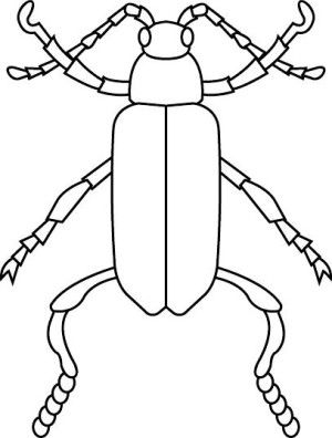 Insects coloring page 26
