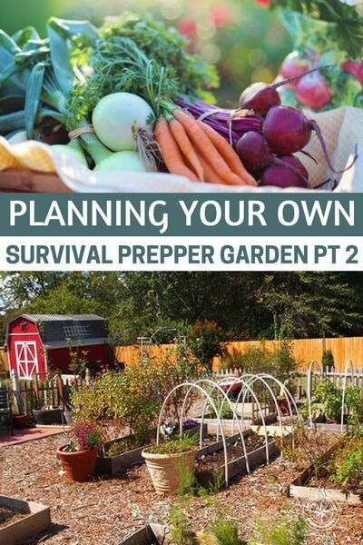 Planning Your Own Survival Prepper Garden Pt 2 - As a survivalist you must always be prepared for the time when things go south and you and your family will need to bug out. In order to do that, many survival experts suggest tips for setting up a perfect bug out location and even if you decide on a great bug out site, you will still need to set up a survival #prepping #preparedness #homestead #homesteading #garden #gardening