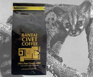 100% PURE, WILD & ORGANIC MEDIUM cooked ROBUSTA WHOLE BEAN, NATURALLY GATHERED WILD Asian palm cat CAT / KOPI LUWAK Civet Coffee BEANS– we have a tendency to package in an exceedingly four oz hermetically sealed foil bag to confirm prolonged freshness — wherever do the low Beans come back From?