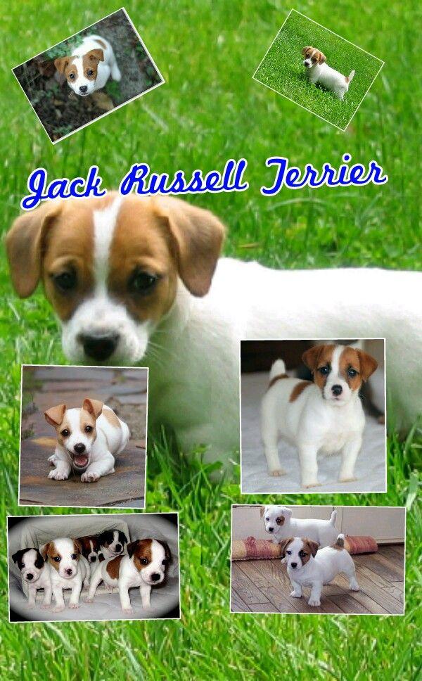 J.R. Terriers