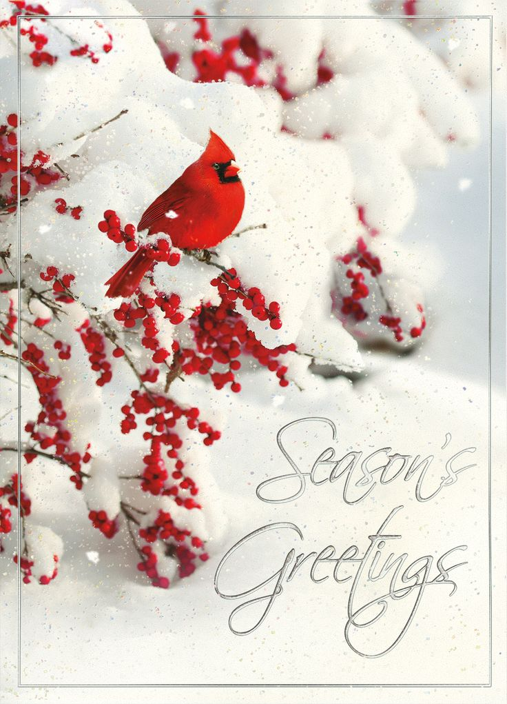 28 best Cardinal Christmas Cards images on Pinterest | Christmas ...