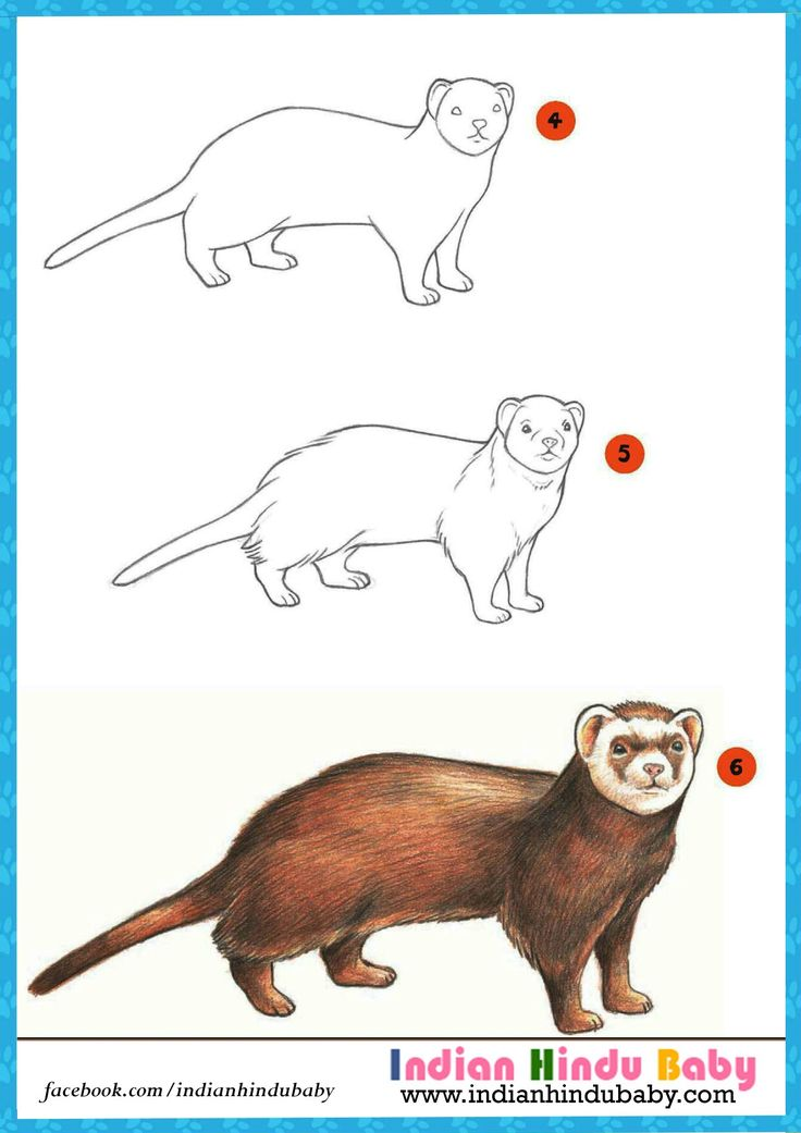 Ferret are very similar to cat in looks. Teach your kid to draw and paint this amazing animal with simple drawing tips
