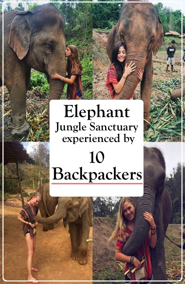Elephant Jungle Sanctuary - Chiang Mai, Thailand