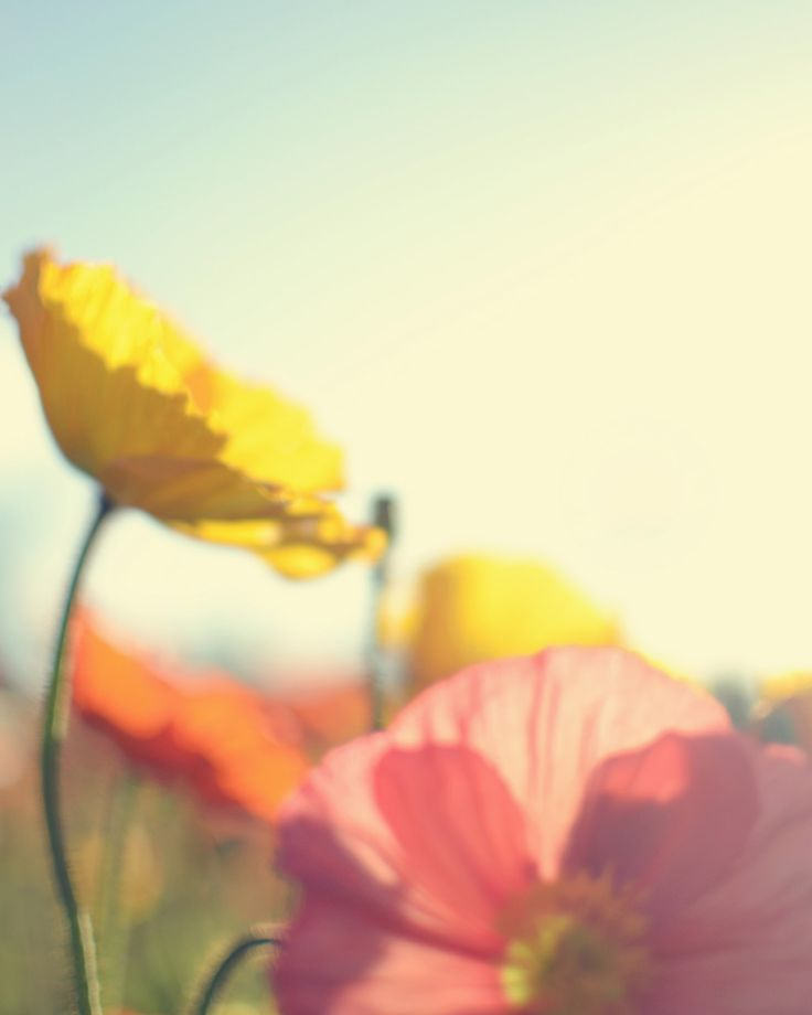 Still Sunday Artist Feature – Bee Creative
