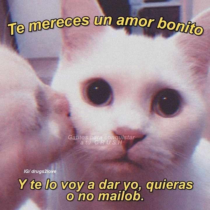 Pin De Katiushkabigail En Amor De Gatito En 2020 Meme Gato Frases Kawaii Memes Romanticos