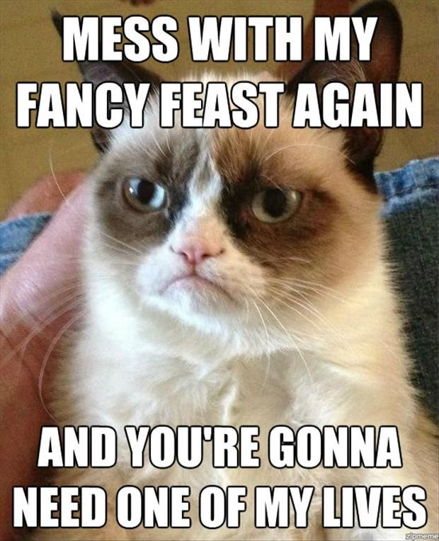#GrumpyCat #meme Grumpy Cat stuff, gifts and meme on www.pinterest.com/erikakaisersot