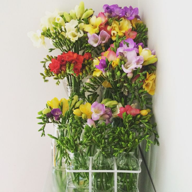 freesia wall