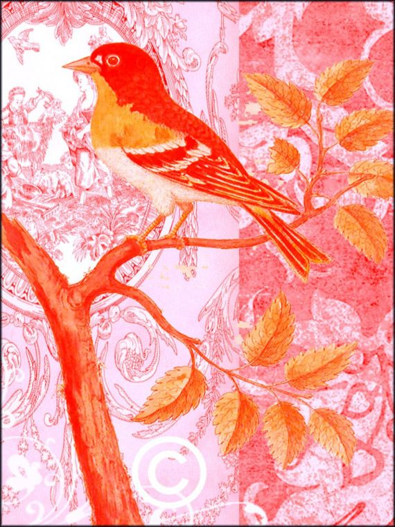 Pink and orange bird