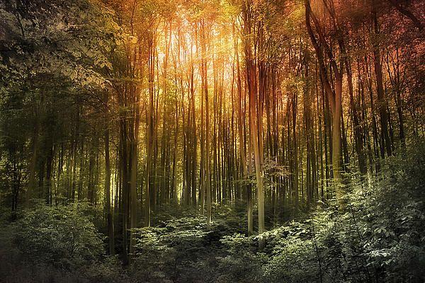 'El Paradiso Mio - Awakening' spiritual landscape of beech wood in Myslecinek, Poland Botanic Gardens
