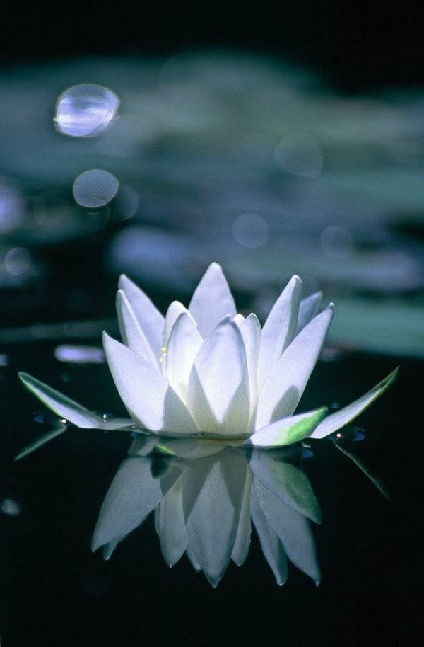 """Sunday morning meditation:  """"Do you have the patience to wait Till your mud settles and the water is clear? Can you remain unmoving Till the right action arises by itself?"""" ~Lao Tzu"""