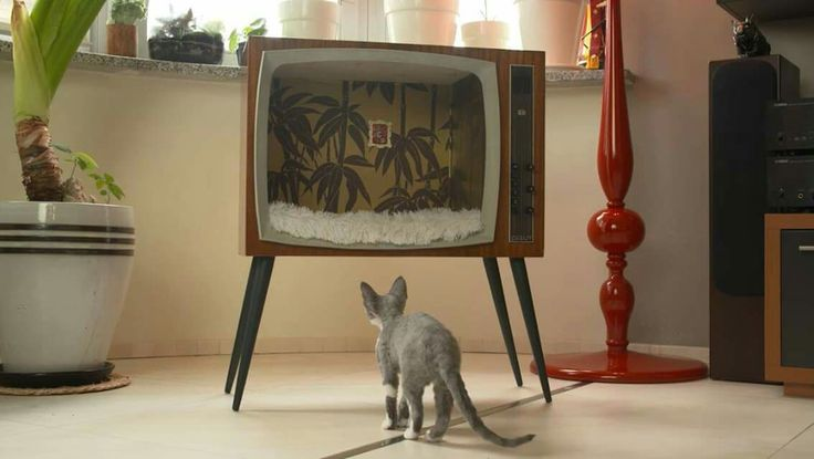 Cats' pallet from old television
