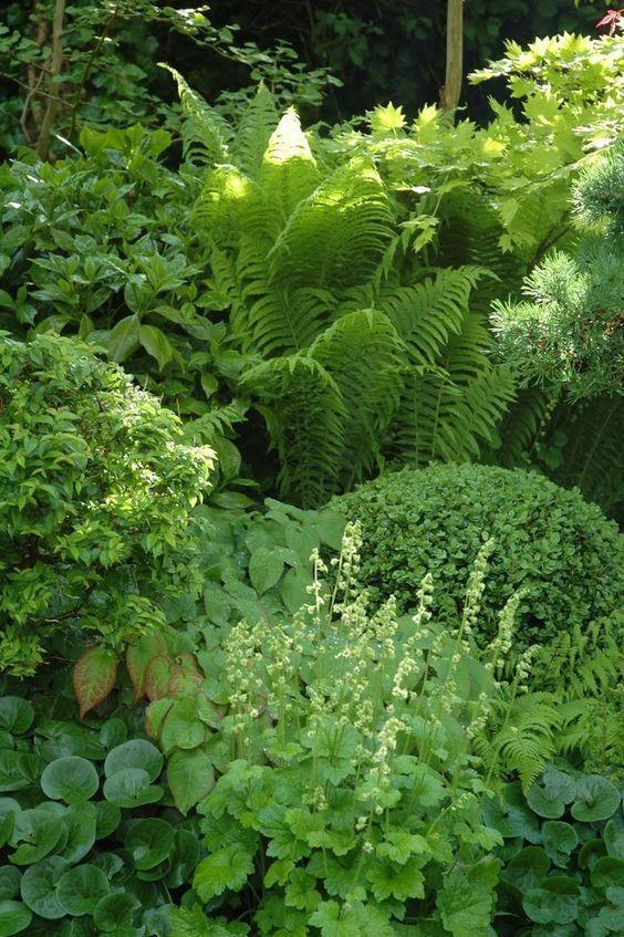 Shade Garden With Hosta, Ferns, Ladyu0027s Mantle, Boxwood, And Wild Ginger.