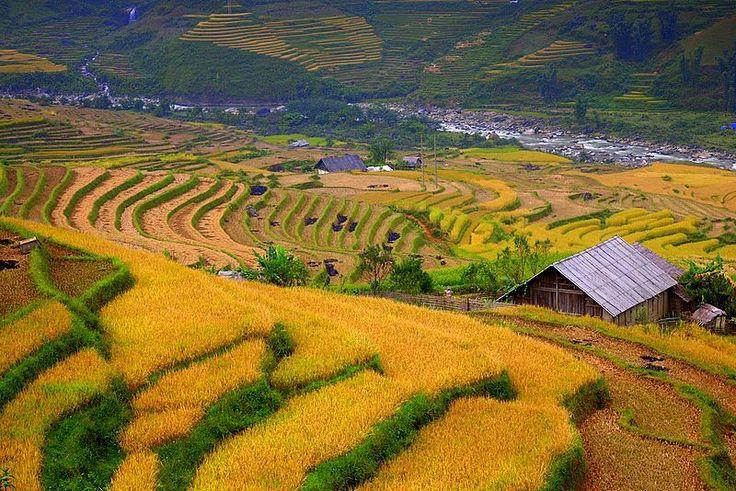 Rice fields of Sapa - Sapa, Lao Cai Vietnam by Erdem Kutukoglu