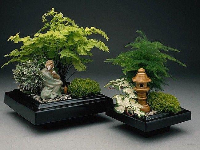 Http Gardenslovers Tumblr Com Post 31864495145 Bonsai Care Bonsai Http Www Roanokemyhomesweethome Com Miniature Zen Garden Bonsai Bonsai Tree