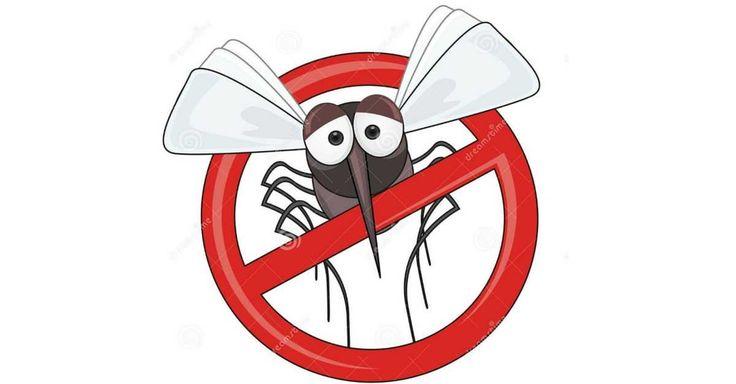 Jednoduchý návod, jak si ze 3 základních surovin vyrobit past na komáry. Léto je v plném proudu a stejně tak komáři, kteří vlétávají do našich…