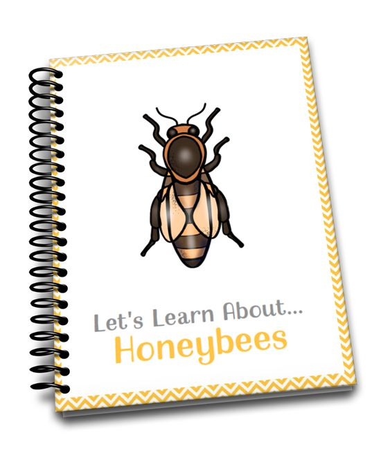 If you're studying bees this spring, you should check out these nonfiction picture books about bees. Present factual information that will keep kids engaged.