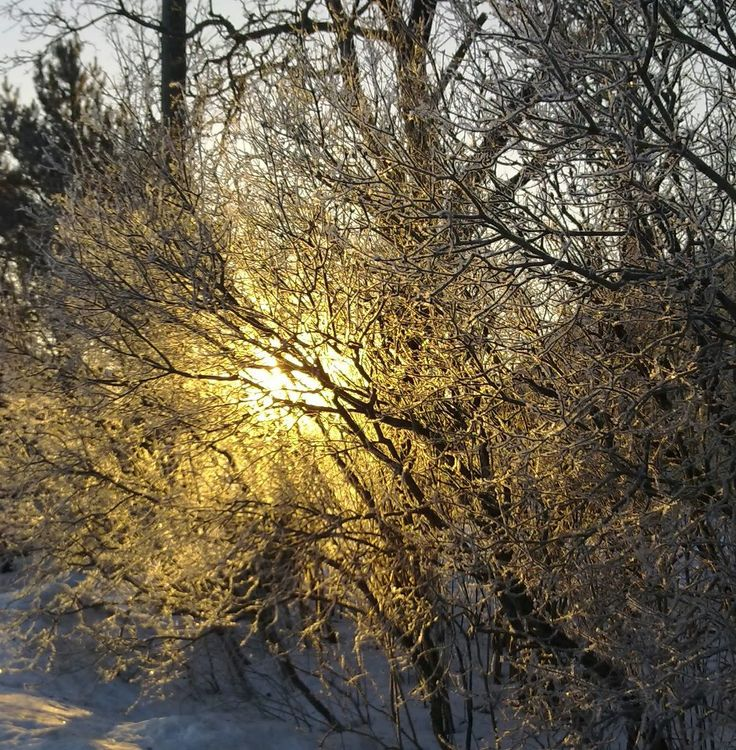 Winter morning light in the village of Ilola, Eastern Porvoo