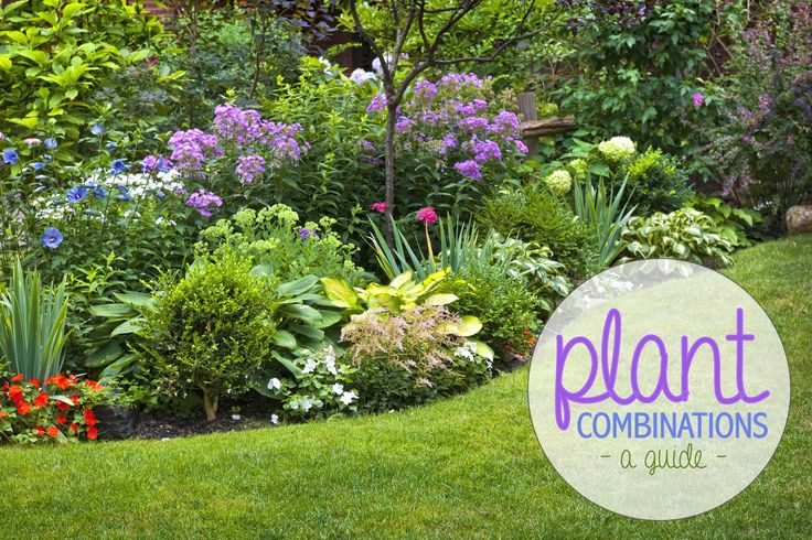 Want to enhance your landscape by planting a variety of flowers and shrubs? Learn how to create the perfect arrangement here! #plant #combination #layout #guide #landscape