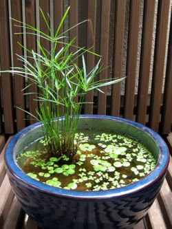 container water gardens are great for small spaces