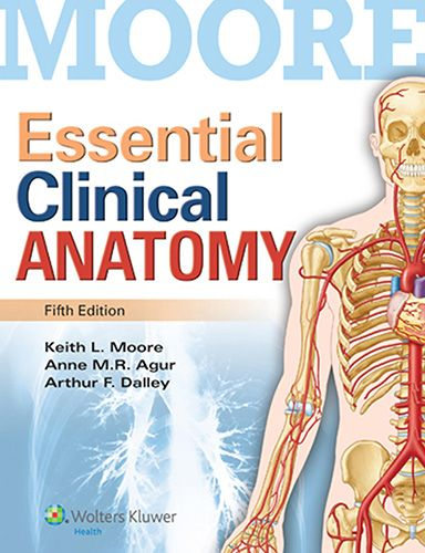The 25 best atlas anatomy ideas on pinterest skeleton medical moores essential clinical anatomy 5th edition pdf download e book fandeluxe Choice Image