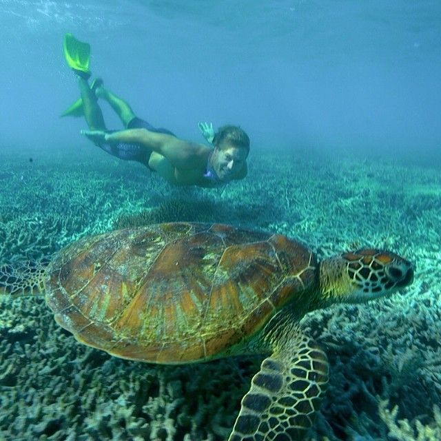 Chris Brown free diving with turtles. Follow Chris on Instagram! http://instagram.com/drchrisbrown