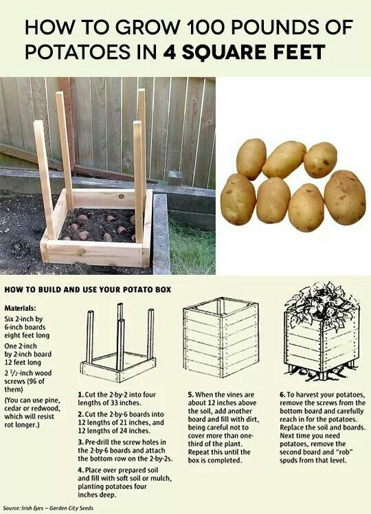 http://www.seattletimes.com/lifestyle/its-not-idaho-but-you-still-can-grow-potatoes/