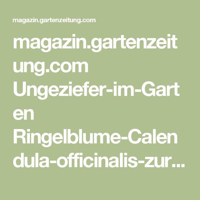 Best Ringelblume Calendula officinalis zur Schneckenabwehr biologische Schneckenbek mpfung im Biogarten Gr nd nger