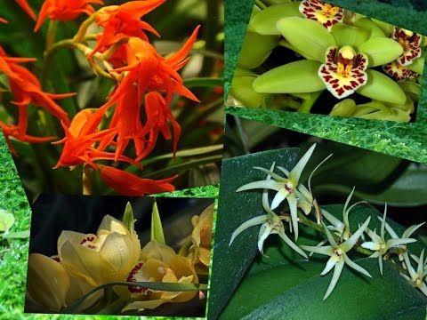 Rare orchids / Редкие виды орхидей