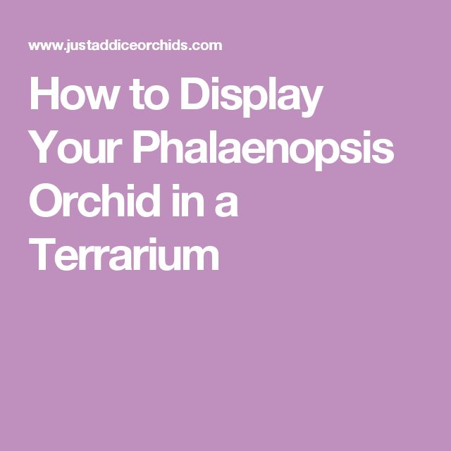How to Display Your Phalaenopsis Orchid in a Terrarium