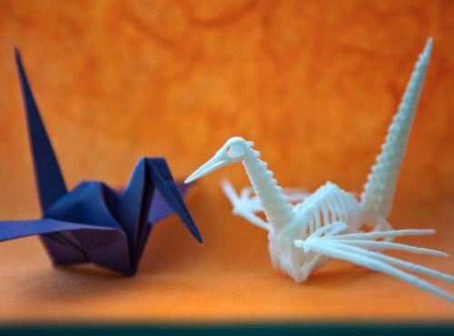 origami u agamy