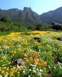 Kirstenbosch Botanical Garden, South Africa ... I loved going here and having tea and scones at the restaurant in the gardens.  A favorite memory of my childhood.